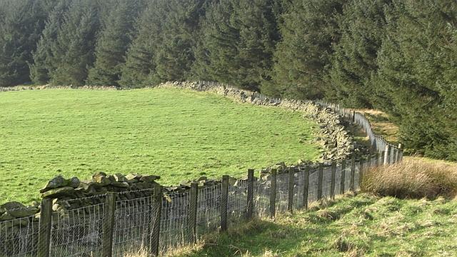 Woodland edge, Watherston Hill