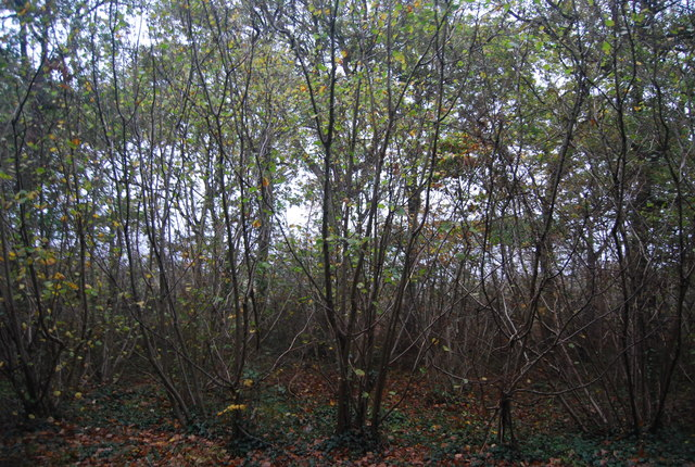 Thornden Wood