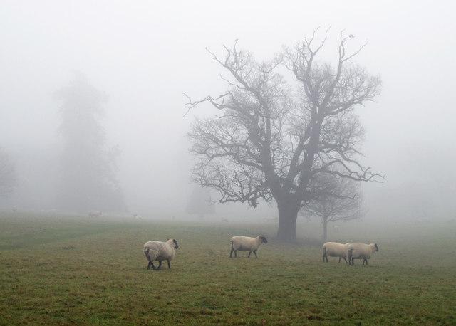 Misty morning in Ickworth Park