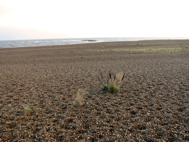 Shingle beach on Shingle Street