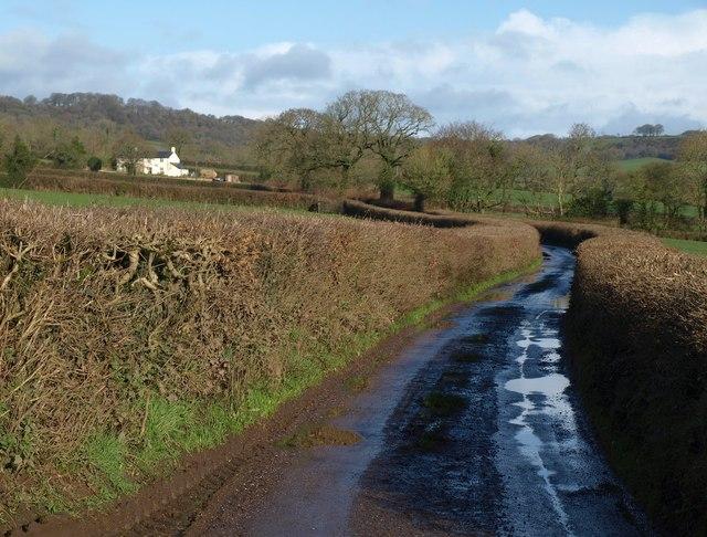 Lane past New Park Farm