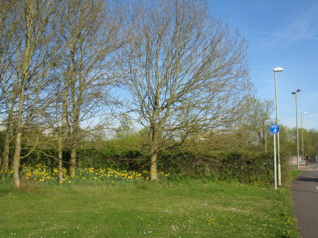 Flowers in Winklebury