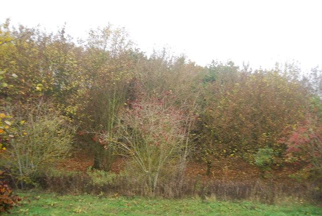 Autumnal colour, West Blean Wood