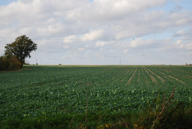 Crops by the Ratcliffe Highway