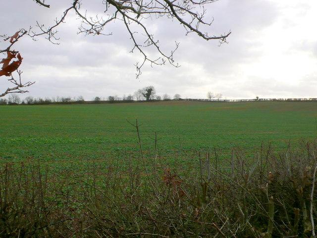 Monarch's Way near Snitterfield