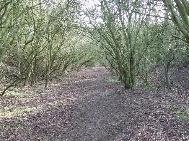 Old Trackbed