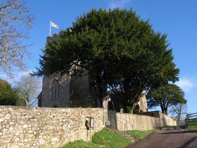 Yews at  Awliscombe church