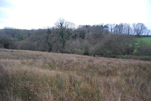 Bog in the Bride Valley