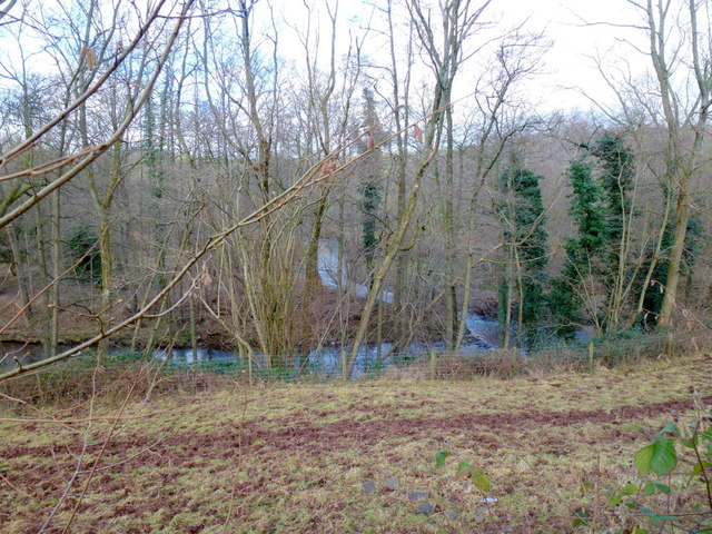 The Monnow in woodland