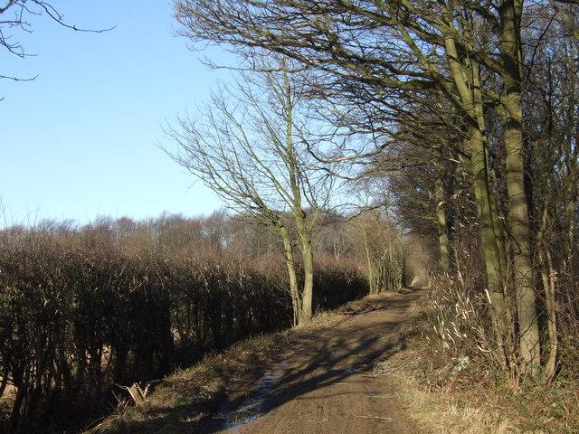 Bridleway heading north beside Old Pickhill Rash