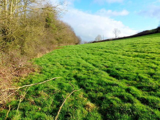 Sunny field edge 2