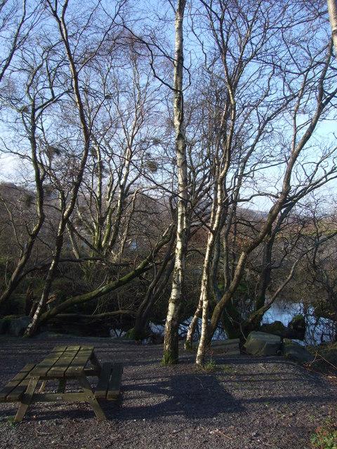 Picnic bench and trees at Llanberis