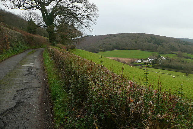 Lane to Headon Cross