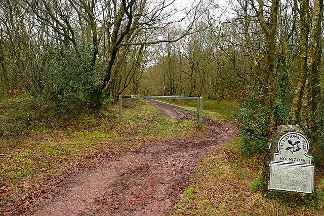 Into Tivington Plantation