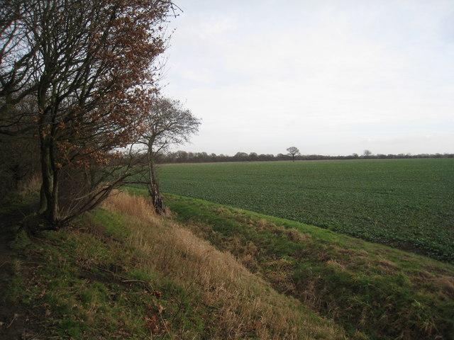 View across the Ashfields
