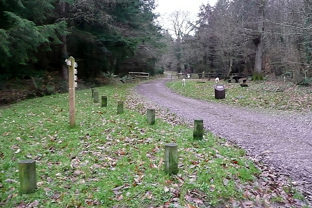 Path up Nutcombe Bottom