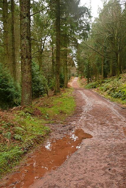 Track in Broadwood Plantation