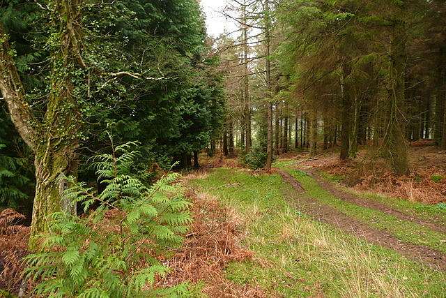 Footpath in Broadwood Plantation
