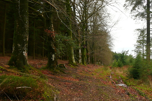 Boundary in Long Wood