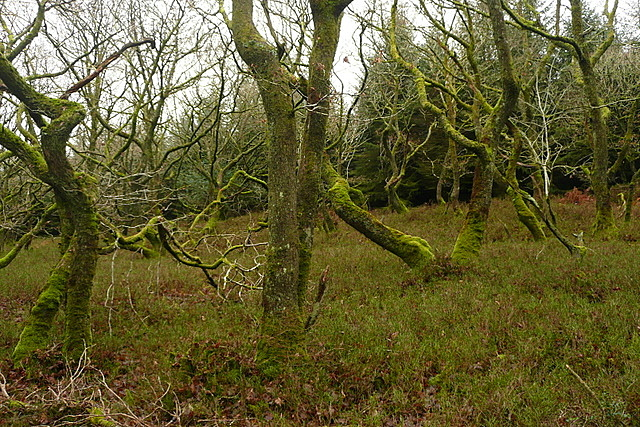 Ancient woodland in Long Wood