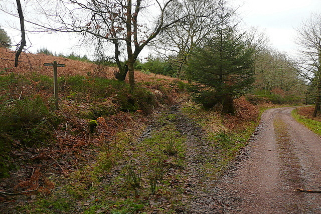 Track in Croydon Hill woodland