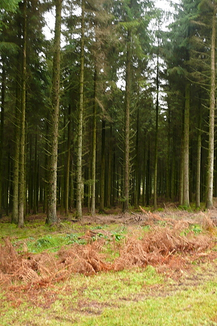 Forestry at Mere Ponds