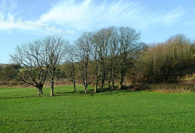 Winter Trees Near Maybole