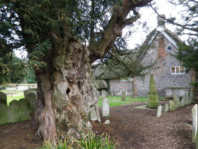 St Peter's at St Mary Bourne- a knotty tree