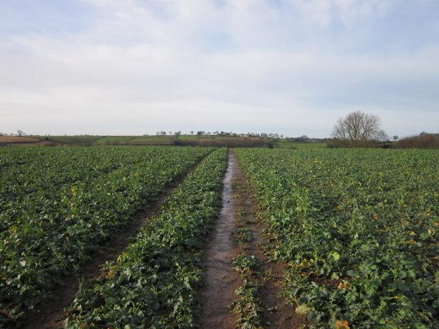 Walking west towards Carr Farm