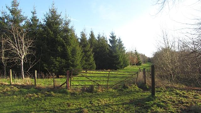 Cambusnethan Wood
