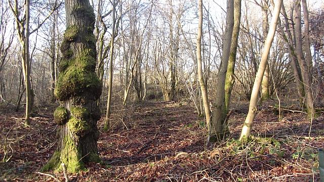 Carbarns Wood