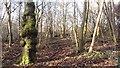 NS7753 : Carbarns Wood by Richard Webb