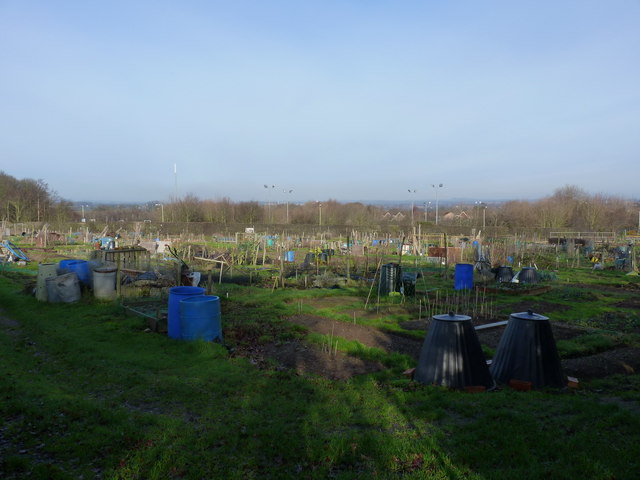 Allotments west of Bayston Hill