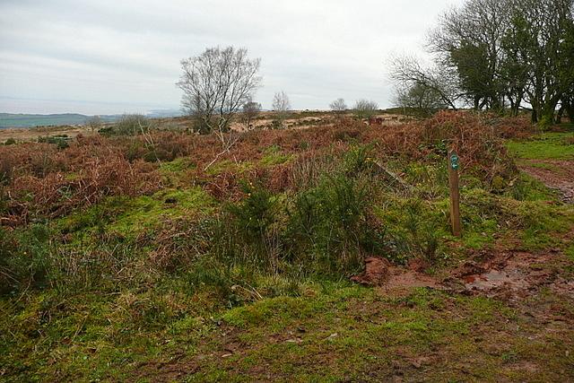 Junction on Rodhuish Common