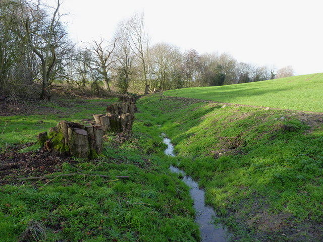 Coppiced alders beside a stream