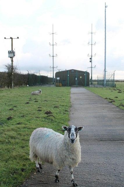 Guard Sheep at Aerial Farm