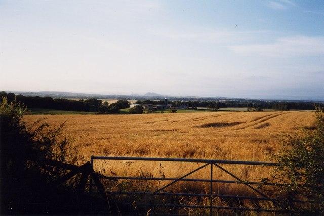 Barley field at Shewington