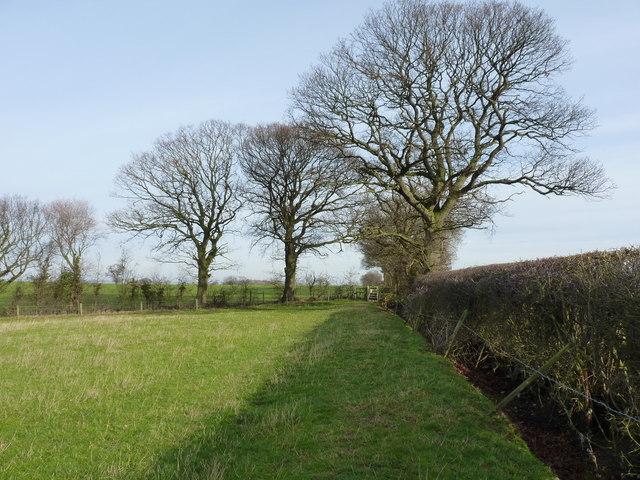 Shropshire oaks