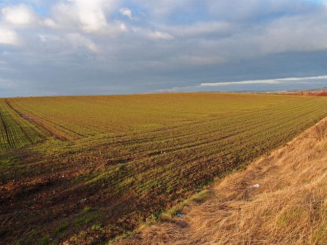 Winter Barley,East Sanquhar Farm