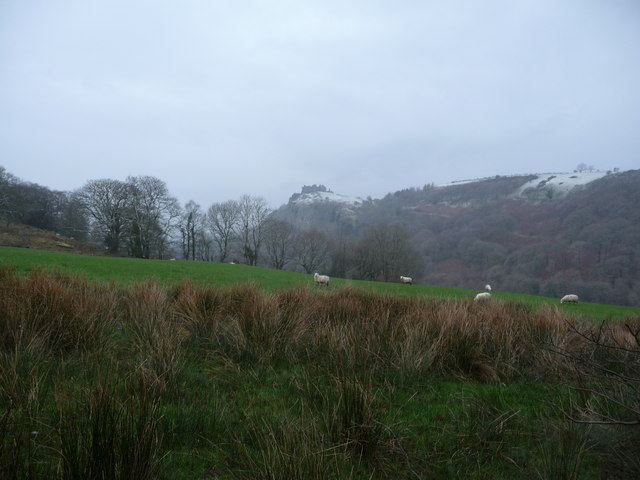 Winter sheep pasture below Carreg Cennen Castle