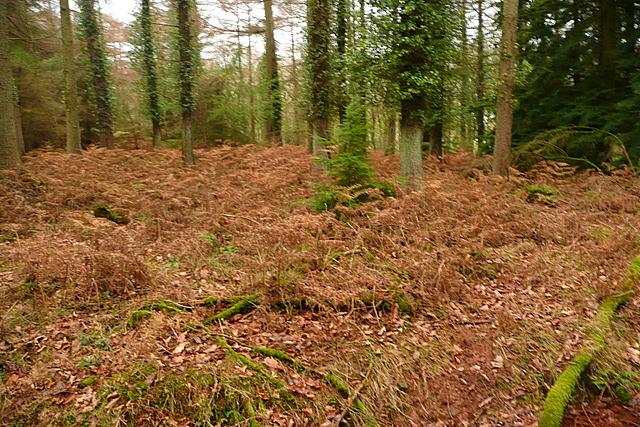 Woodland at Longcombe Hill