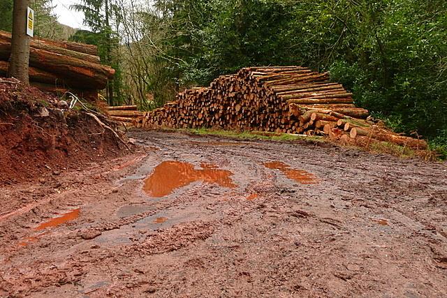 Felling in Longcombe Hill Wood