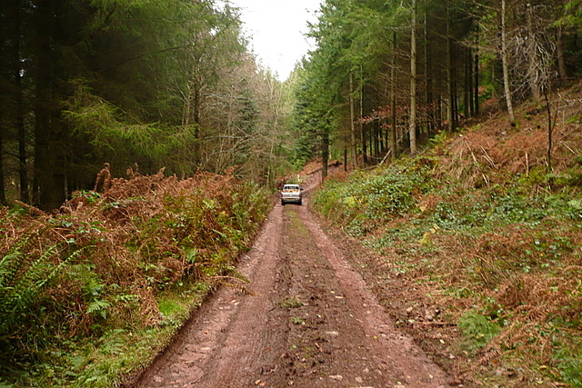 Forestry road past Kings Hedge Coppice