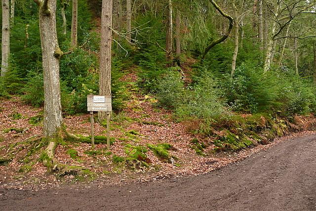 Entrance to Dunster Woodland