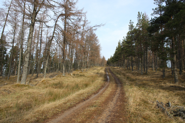 Forest track on Cnoc Fergan