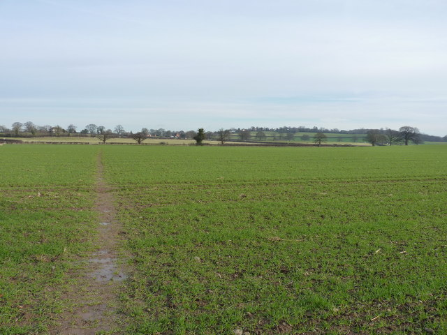Fields at Longden