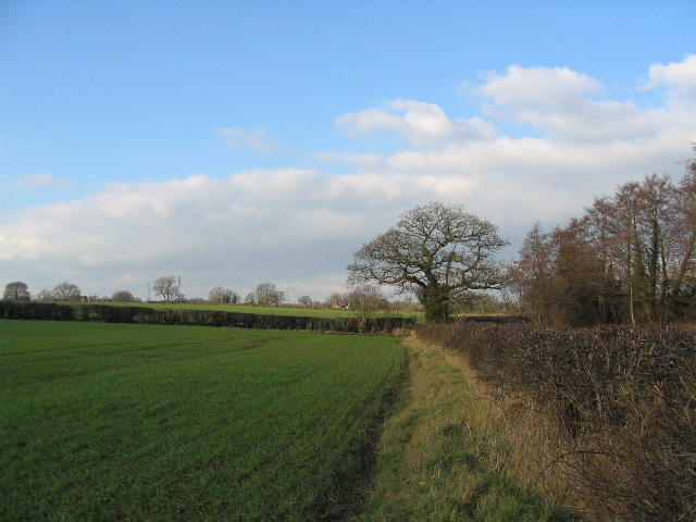 Fields by Washbrook Lane
