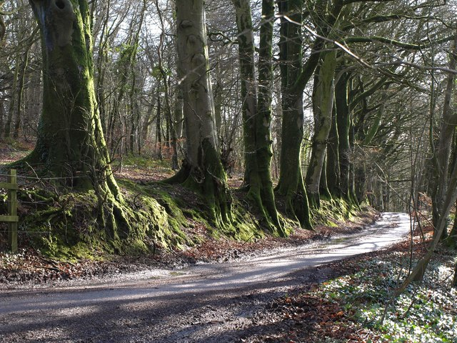 Beeches on St Cyres' Hill
