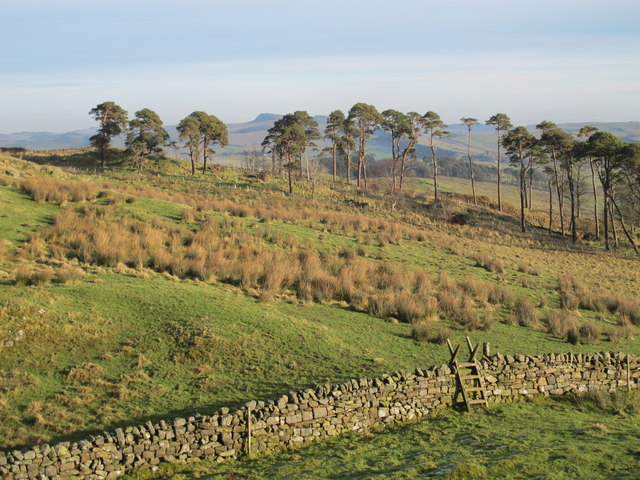 Rough pastures and plantation west of Alloa Lea (2)