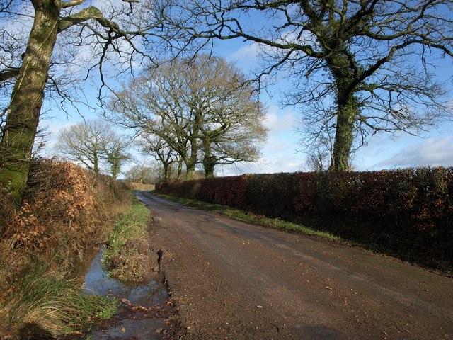 Lane to Limer's Cross